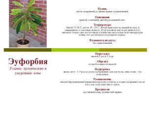 Эуфорбия Родина: тропические и умеренные зоны Полив. летом умеренный, в зимнее в