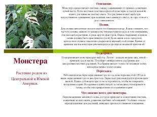 Монстера Растение родом из Центральной и Южной Америки. Освещение. Монстера пред