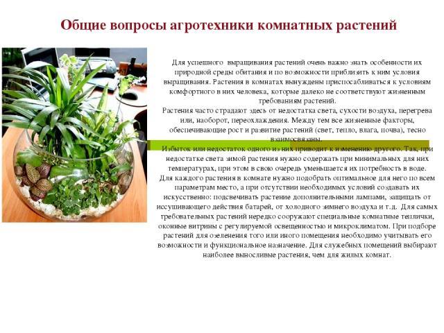 Общие вопросы агротехники комнатных растений Для успешного выращивания растений очень важно знать особенности их природной среды обитания и по возможности приблизить к ним условия выращивания. Растения в комнатах вынуждены приспосабливаться к услови…
