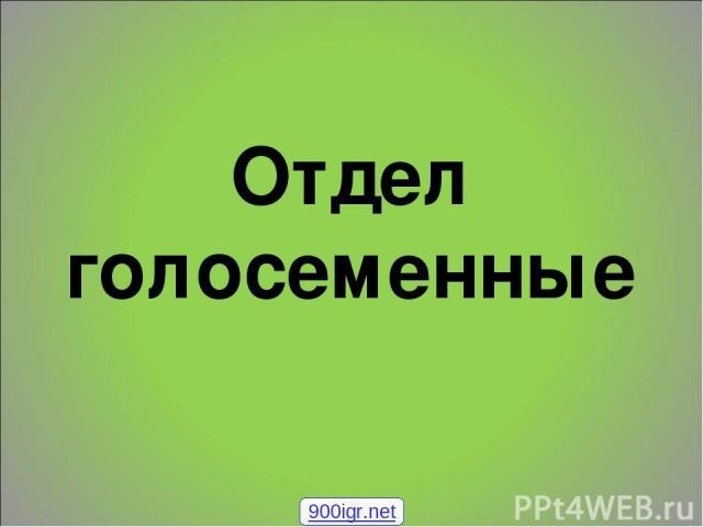 Отдел голосеменные 900igr.net