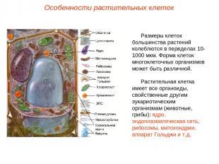 Размеры клеток большинства растений колеблются в переделах 10-1000 мкм. Форма кл