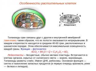 Тилакоиды гран связаны друг с другом и внутренней мембраной ламеллами таким обра