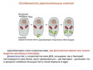 Цианобактерии стали хлоропластами, при фотосинтезе именно они начали выделять ки