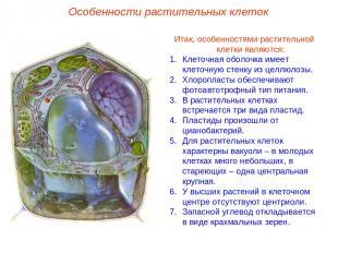 Итак, особенностями растительной клетки являются: Клеточная оболочка имеет клето