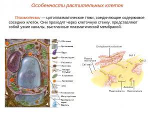 Плазмодесмы — цитоплазматические тяжи, соединяющие содержимое соседних клеток. О