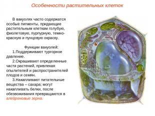 В вакуолях часто содержатся особые пигменты, придающие растительным клеткам голу