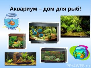 Аквариум – дом для рыб!