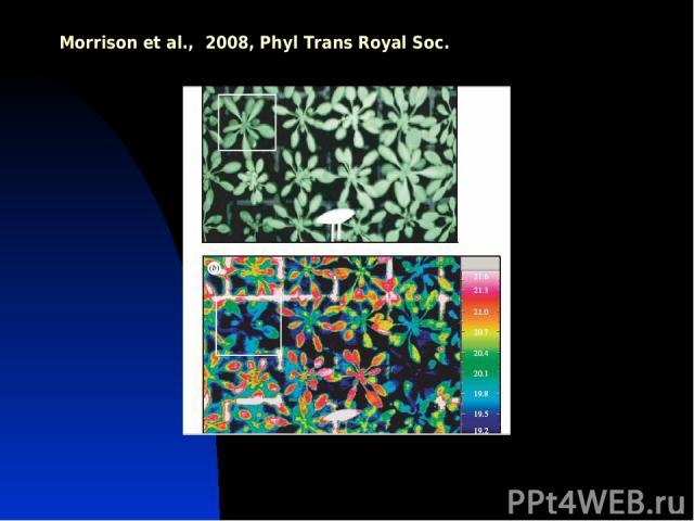 Morrison et al., 2008, Phyl Trans Royal Soc.