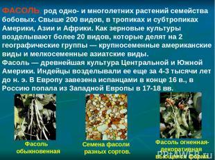 Фасоль обыкновенная Фасоль огненная- декоративная вьющаяся форма Семена фасоли р