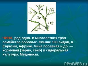 ЧИНА, род одно- и многолетних трав семейства бобовых. Свыше 100 видов, в Евразии