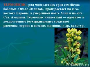ТЕРМОПСИС, род многолетних трав семейства бобовых. Около 30 видов, произрастает