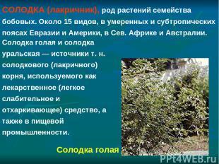 СОЛОДКА (лакричник), род растений семейства бобовых. Около 15 видов, в умеренных