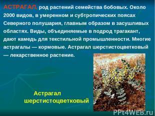 АСТРАГАЛ, род растений семейства бобовых. Около 2000 видов, в умеренном и субтро