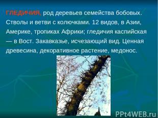 ГЛЕДИЧИЯ, род деревьев семейства бобовых. Стволы и ветви с колючками. 12 видов,