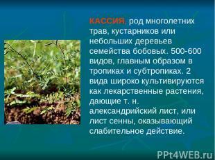КАССИЯ, род многолетних трав, кустарников или небольших деревьев семейства бобов