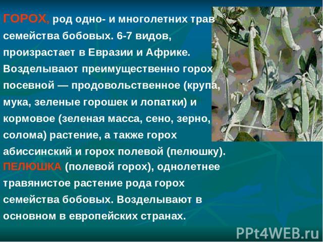ПЕЛЮШКА (полевой горох), однолетнее травянистое растение рода горох семейства бобовых. Возделывают в основном в европейских странах. ГОРОХ, род одно- и многолетних трав семейства бобовых. 6-7 видов, произрастает в Евразии и Африке. Возделывают преим…