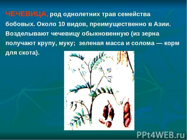 ЧЕЧЕВИЦА, род однолетних трав семейства бобовых. Около 10 видов, преимущественно в Азии. Возделывают чечевицу обыкновенную (из зерна получают крупу, муку; зеленая масса и солома — корм для скота).