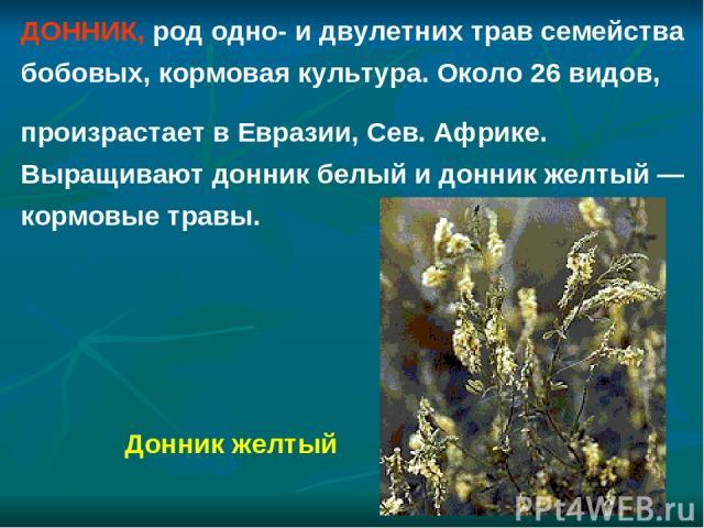ДОННИК, род одно- и двулетних трав семейства бобовых, кормовая культура. Около 26 видов, произрастает в Евразии, Сев. Африке. Выращивают донник белый и донник желтый — кормовые травы. Донник желтый