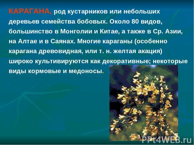 КАРАГАНА, род кустарников или небольших деревьев семейства бобовых. Около 80 видов, большинство в Монголии и Китае, а также в Ср. Азии, на Алтае и в Саянах. Многие караганы (особенно карагана древовидная, или т. н. желтая акация) широко культивируют…