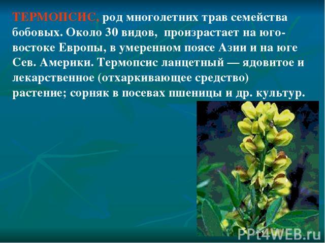 ТЕРМОПСИС, род многолетних трав семейства бобовых. Около 30 видов, произрастает на юго-востоке Европы, в умеренном поясе Азии и на юге Сев. Америки. Термопсис ланцетный — ядовитое и лекарственное (отхаркивающее средство) растение; сорняк в посевах п…