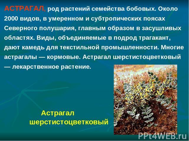 АСТРАГАЛ, род растений семейства бобовых. Около 2000 видов, в умеренном и субтропических поясах Северного полушария, главным образом в засушливых областях. Виды, объединяемые в подрод трагакант, дают камедь для текстильной промышленности. Многие аст…