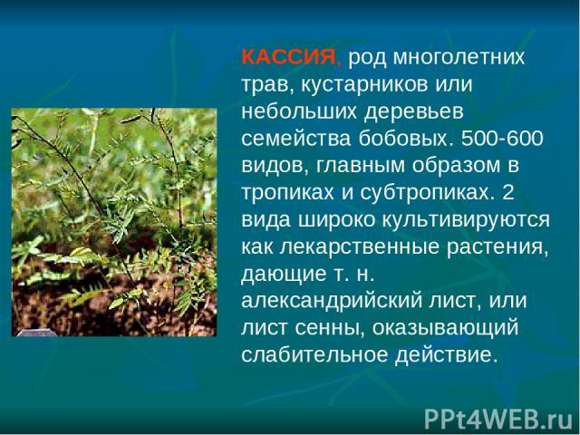 КАССИЯ, род многолетних трав, кустарников или небольших деревьев семейства бобовых. 500-600 видов, главным образом в тропиках и субтропиках. 2 вида широко культивируются как лекарственные растения, дающие т. н. александрийский лист, или лист сенны, …