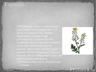 Горчица. ГОРЧИЦА, род одно- и многолетних трав семейства крестоцветных. 7-10 вид