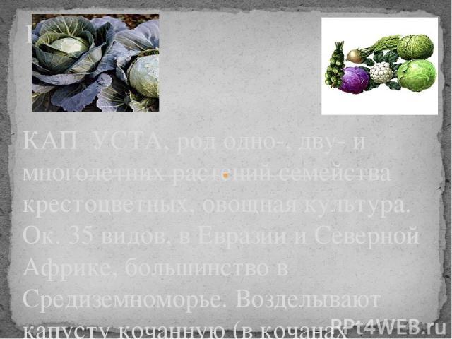 Капуста. КАП УСТА, род одно-, дву- и многолетних растений семейства крестоцветных, овощная культура. Ок. 35 видов, в Евразии и Северной Африке, большинство в Средиземноморье. Возделывают капусту кочанную (в кочанах сахара, белки, витамин С, минераль…