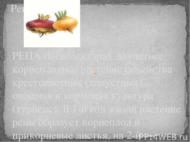 РЕПА (Brassica rapa), двулетнее корнеплодное растение семейства крестоцветных (капустных), овощная и кормовая культура (турнепс). В 1-й год жизни растение репы образует корнеплод и прикорневые листья, на 2-й — цветки и семена. Листья лировидно-рассе…