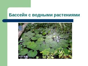 Бассейн с водными растениями
