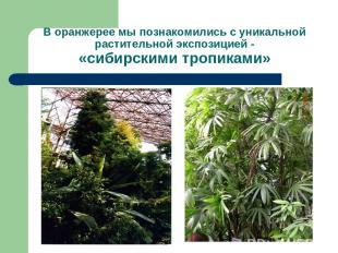 В оранжерее мы познакомились с уникальной растительной экспозицией - «сибирскими