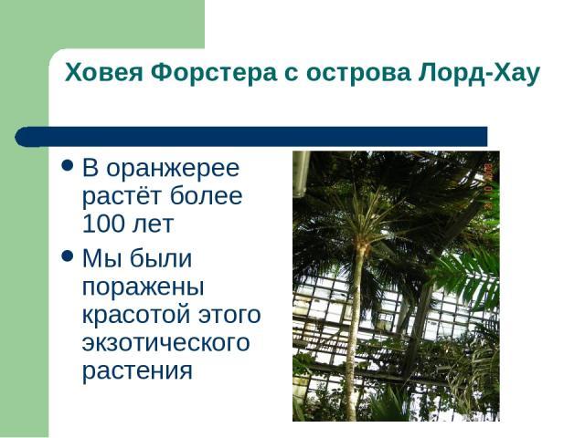 Ховея Форстера с острова Лорд-Хау В оранжерее растёт более 100 лет Мы были поражены красотой этого экзотического растения
