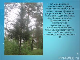 ЕЛЬ, род хвойных вечнозеленых деревьев семейства сосновых. Ок. 45 видов, главным