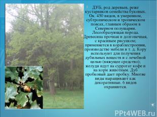 ДУБ, род деревьев, реже кустарников семейства буковых. Ок. 450 видов, в умеренно