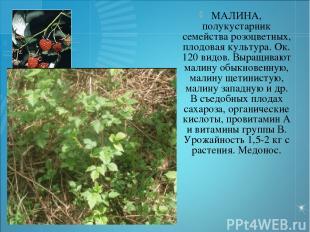 МАЛИНА, полукустарник семейства розоцветных, плодовая культура. Ок. 120 видов. В