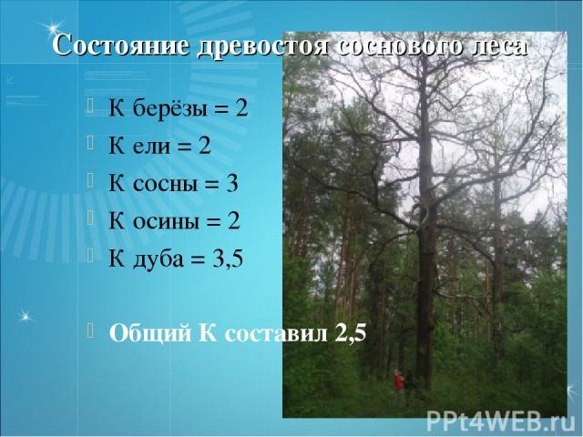 Состояние древостоя соснового леса К берёзы = 2 К ели = 2 К сосны = 3 К осины = 2 К дуба = 3,5 Общий К составил 2,5