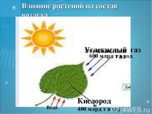 Влияние растений на состав воздуха Вода Кислород 400 млрд т в год 600 млрд т в год Углекислый газ