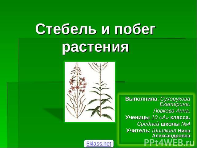 Стебель и побег растения 5klass.net