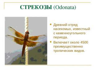 СТРЕКОЗЫ (Odonata) Древний отряд насекомых, известный с каменноугольного периода
