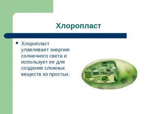 Хлоропласт Хлоропласт улавливает энергию солнечного света и использует ее для со