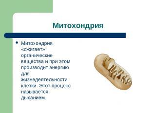 Митохондрия Митохондрия «сжигает» органические вещества и при этом производит эн