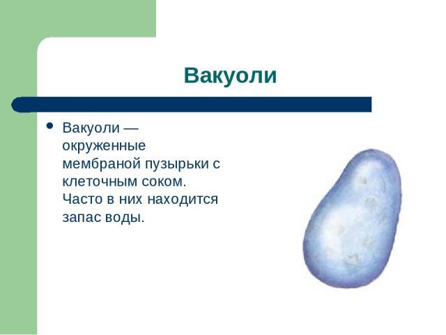 Вакуоли Вакуоли — окруженные мембраной пузырьки с клеточным соком. Часто в них находится запас воды.