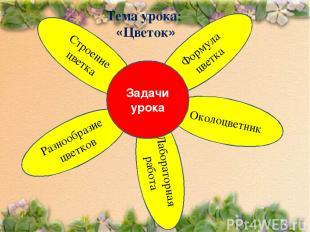 Лабораторная работа Формула цветка Разнообразие цветков Тема урока: «Цветок»
