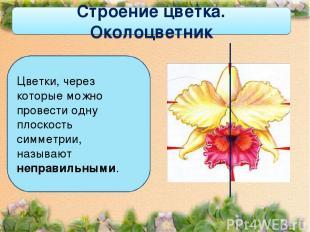 Строение цветка. Околоцветник Цветки, через которые можно провести одну плоскост