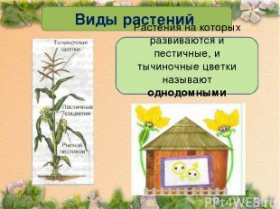 Виды растений Растения на которых развиваются и пестичные, и тычиночные цветки н