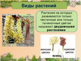 Виды растений Растения на которых развиваются только пестичные или только тычино