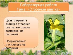 Цель: закрепить знания о строении цветка, как органа размножения растений. Обору