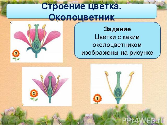 Задание Цветки с каким околоцветником изображены на рисунке Строение цветка. Околоцветник