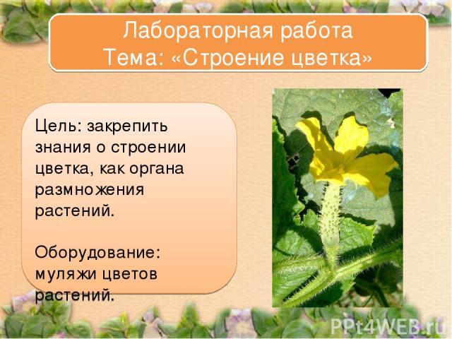 Цель: закрепить знания о строении цветка, как органа размножения растений. Оборудование: муляжи цветов растений. Лабораторная работа Тема: «Строение цветка»