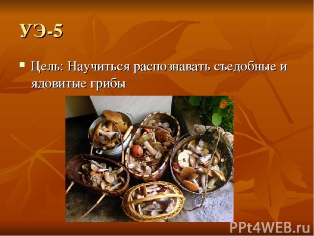 УЭ-5 Цель: Научиться распознавать съедобные и ядовитые грибы